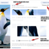 Pic Scatter lets you Create New Facebook Profile Pictures