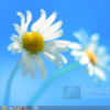 Start8 Brings the Original Start Menu in Windows 8