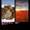 Get Bing Backgrounds as Windows Phone Wallpapers with Papercut