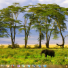 Bing's Best 3- Windows 7 Theme