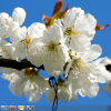 Download Czech Spring Theme for Windows 7