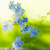 Download Nature Theme for Windows 7