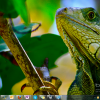 Bing Photo Contest and World Cup Windows 7 Themes